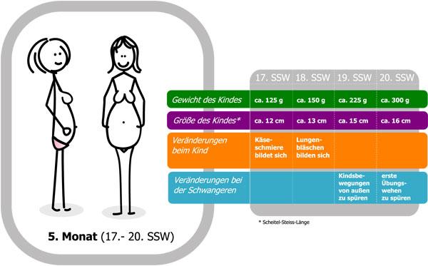 17 schwangerschaftswoche 17 ssw f tus bewegungen des kindes. Black Bedroom Furniture Sets. Home Design Ideas