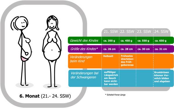 schwanger welche woche