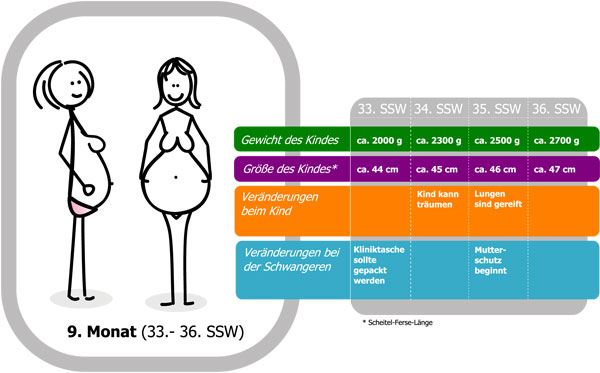 33 ssw schwangerschaftswoche schwangerschaft f tus werdende mutter beschwerden. Black Bedroom Furniture Sets. Home Design Ideas
