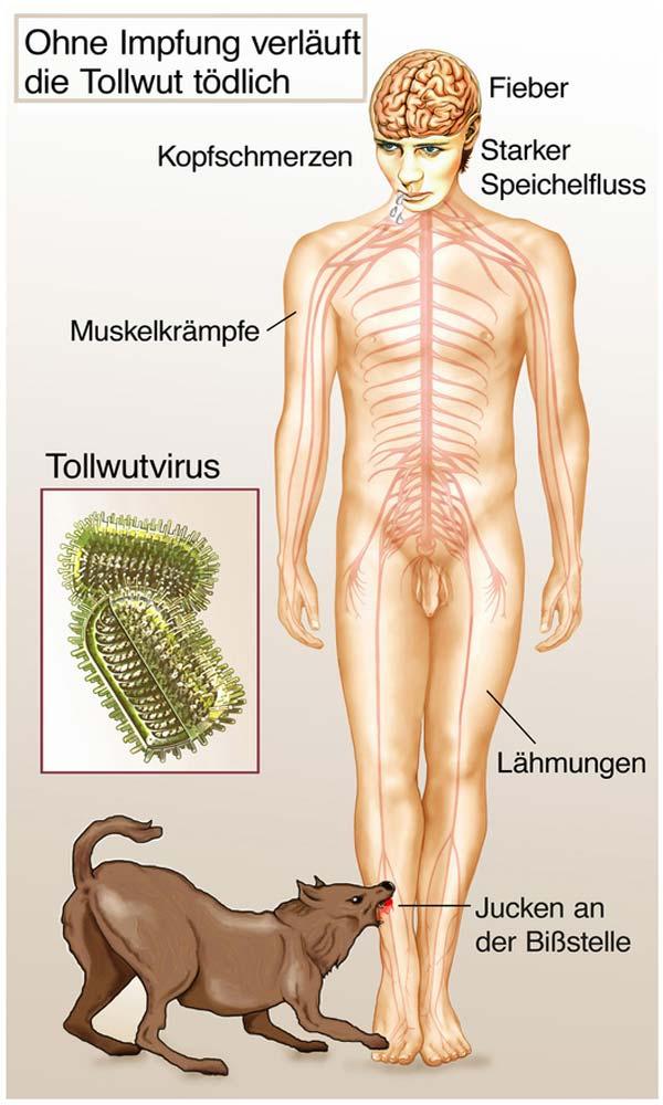 Die Parasiten und die Insekten die für den Menschen gefährlich sind