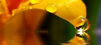 20101109-Der Musenhof: Schönheit, Vitalität und Gesundheit aus einer Hand