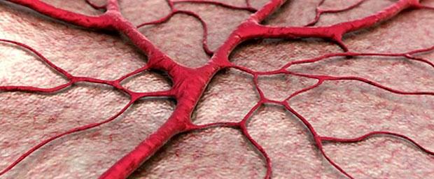 Transplantationsfähige Blutgefäße in nur sieben Tagen im Labor erzeugt