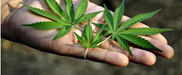 Marihuana als Krebskiller?