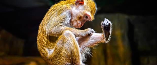 Affenpocken