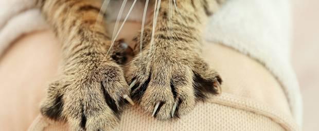 Katzenkratzkrankheit