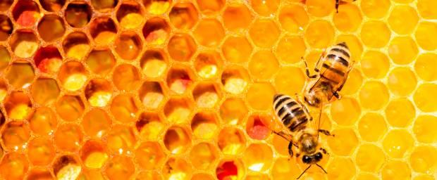Bienengiftallergie