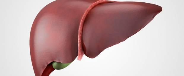 Blutwerte der Leber / Leberwerte