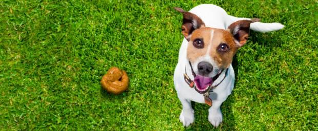 Hundespulwurm (Toxocariasis)
