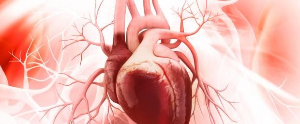 Anatomie des Herzens - 3D Darstellung