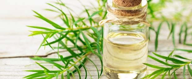 Teebaumöl zur Behandlung von Krätze