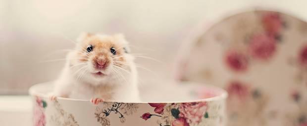 Hamster in Tasse