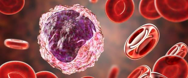 Monozyten umgeben von roten Blutkörperchen