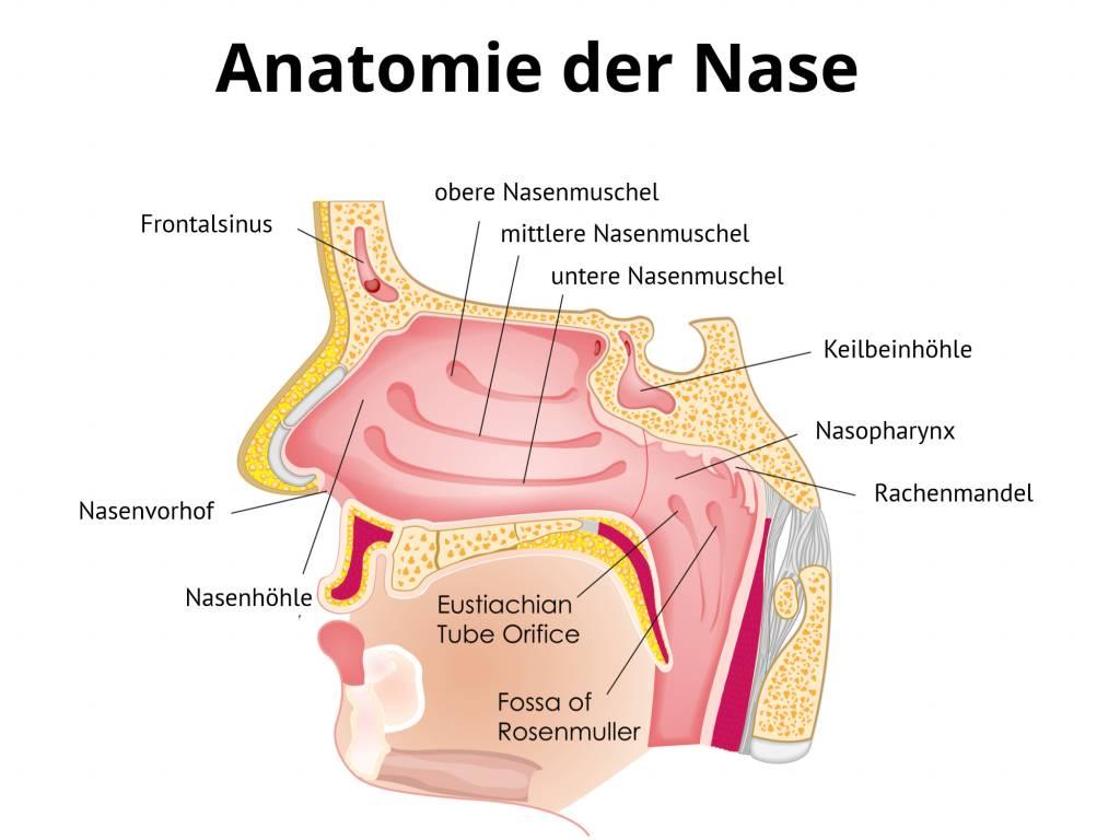 Nasenmuscheln Verkleinerung - Operation Nasenmuscheln