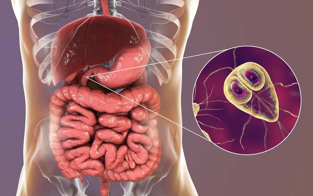 a fertőzés- megelőző intézkedések útjának kórokozójának aszcariasis jellemzői