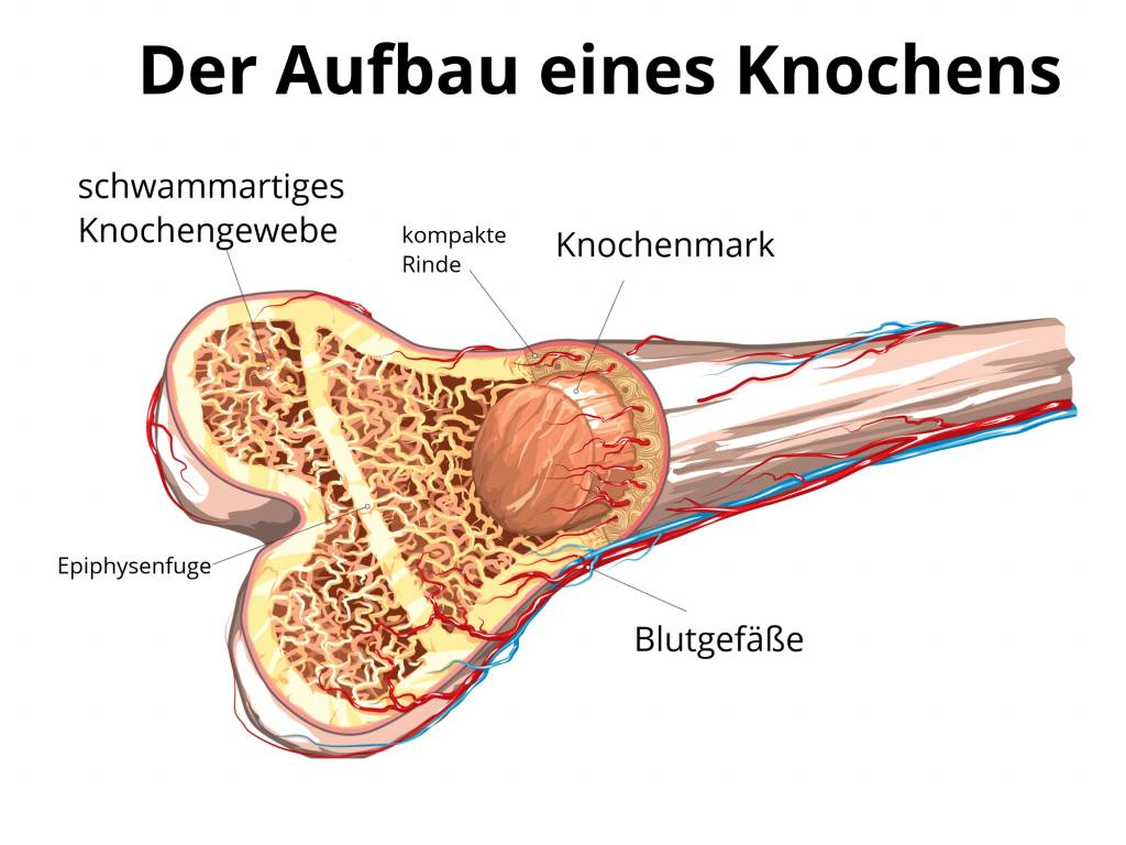Behandlung Knochenbrüche - Knochenbruchbehandlung - Knochenbruch ...