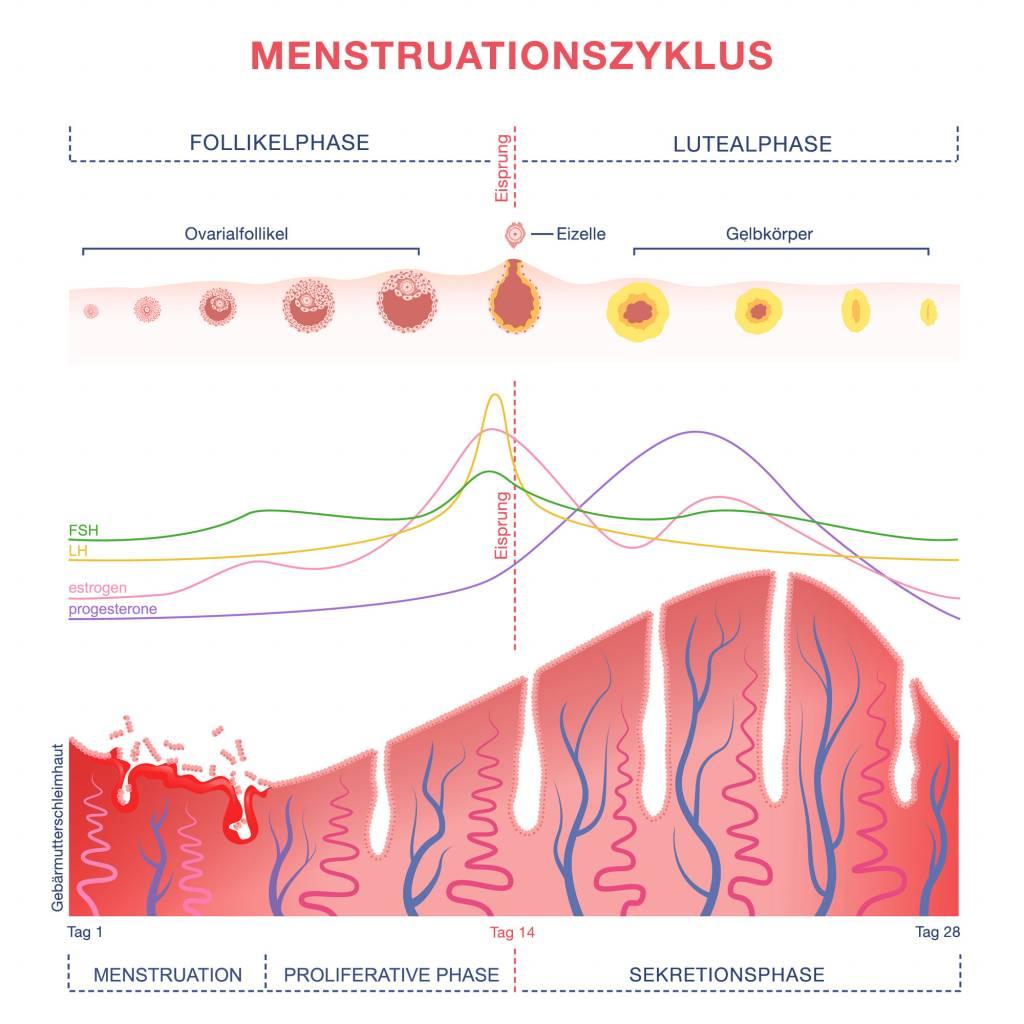 östrogen und progesteronmangel fürth