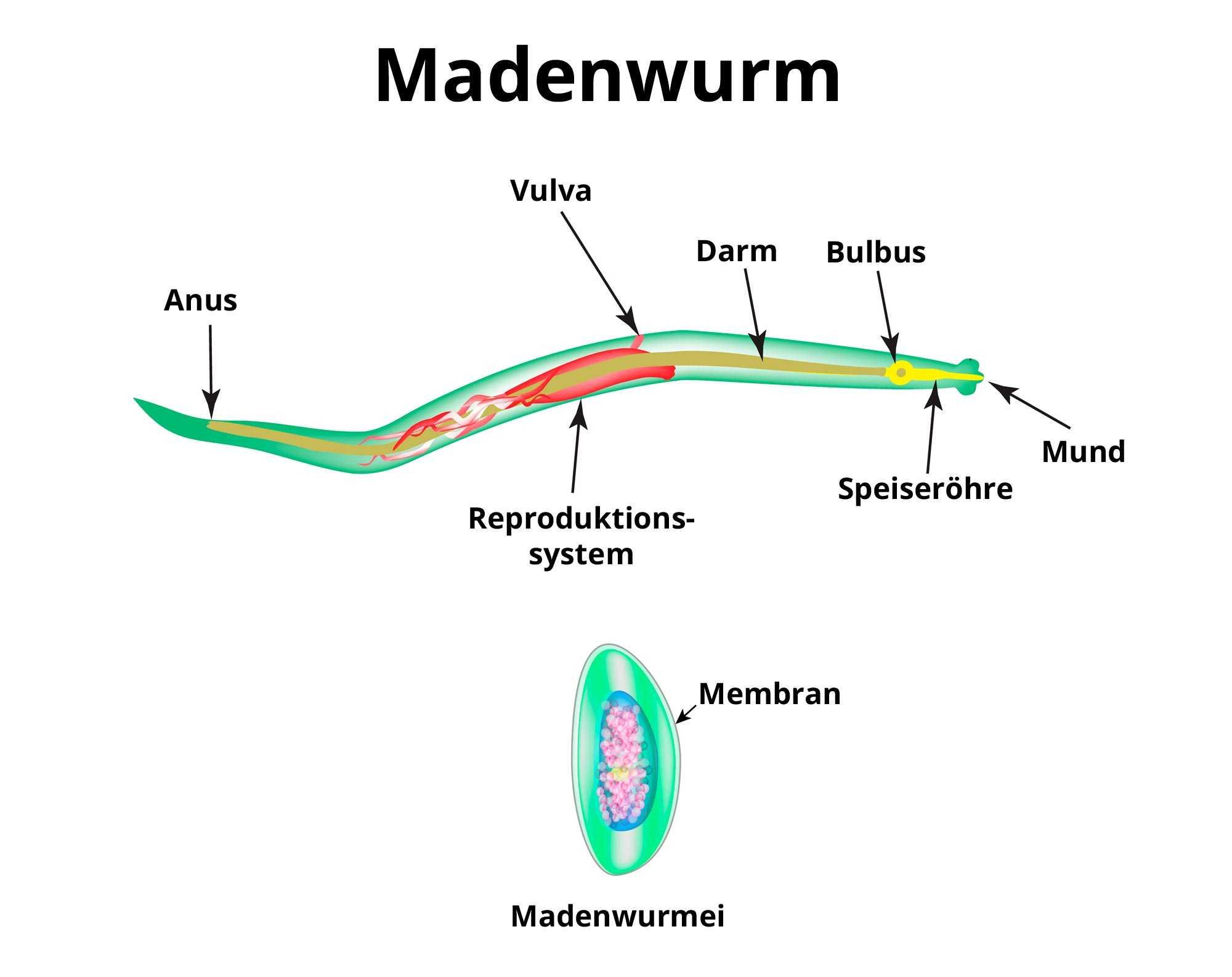 enterobiasis vermox remedii pentru paraziți pe flori