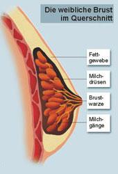 Die Operationen nach der Erhöhung der Brust in rossii